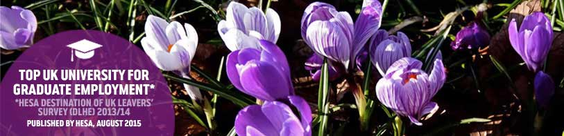 Top UK Uni Graduate Employment Home - Spring Crocuses