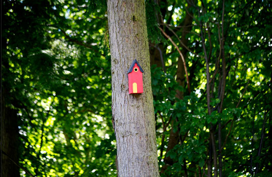 Treehouse bird house